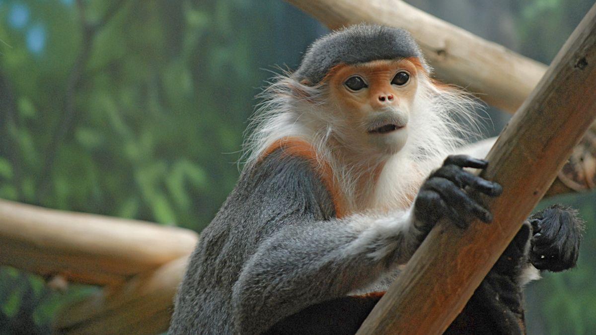 Endangered Primate Rescue Center Primates 2 1200X600