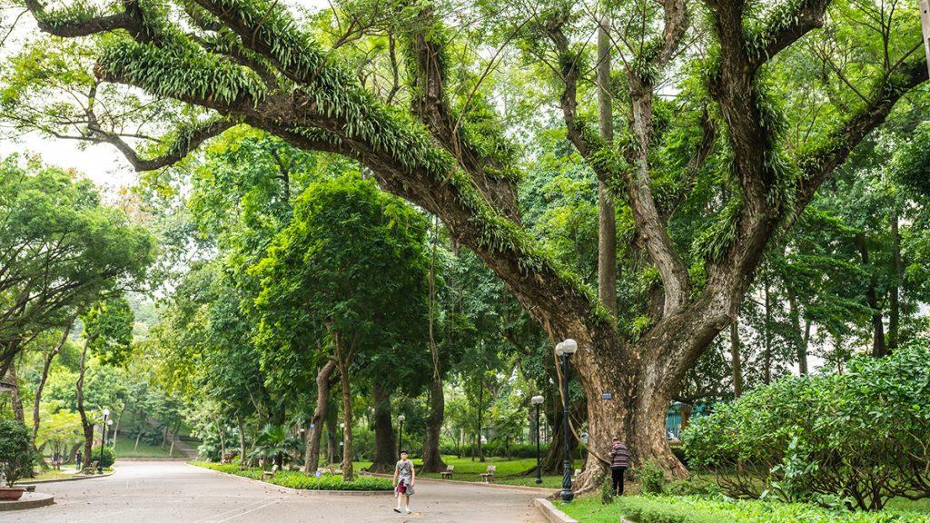 Chao Hanoi Botanical Garden 4