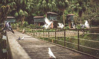 Chao Hanoi Botanical Garden