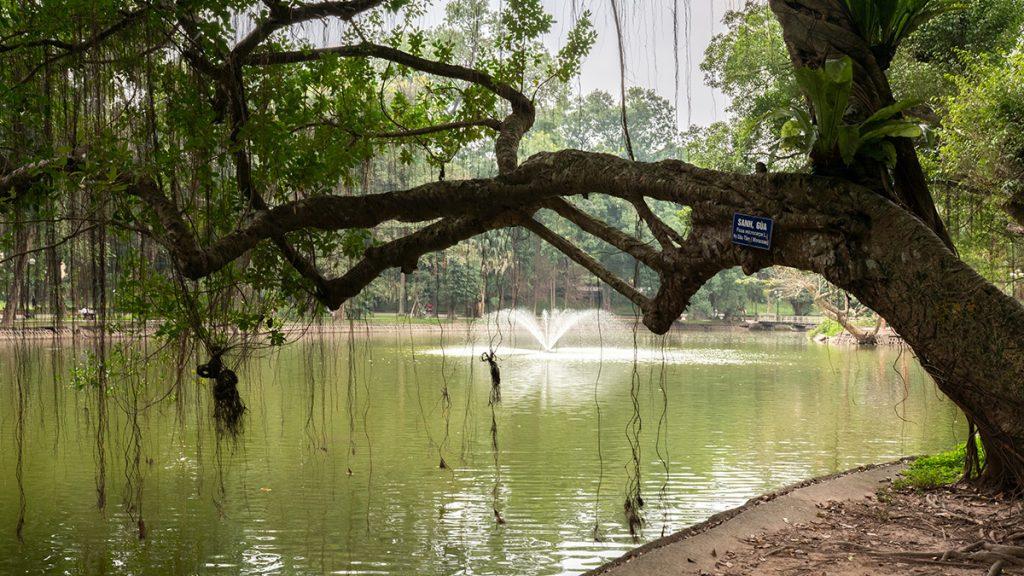 Hanoi Botanical Garden 2020