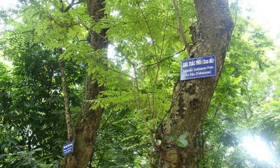 Trees Hanoi
