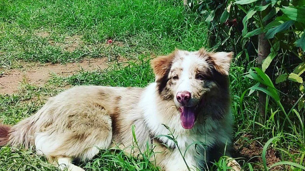 Dog In Hanoi