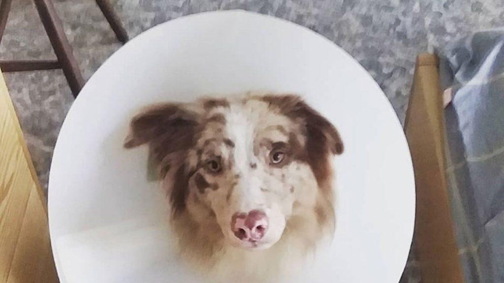 Dog Clinic Hanoi