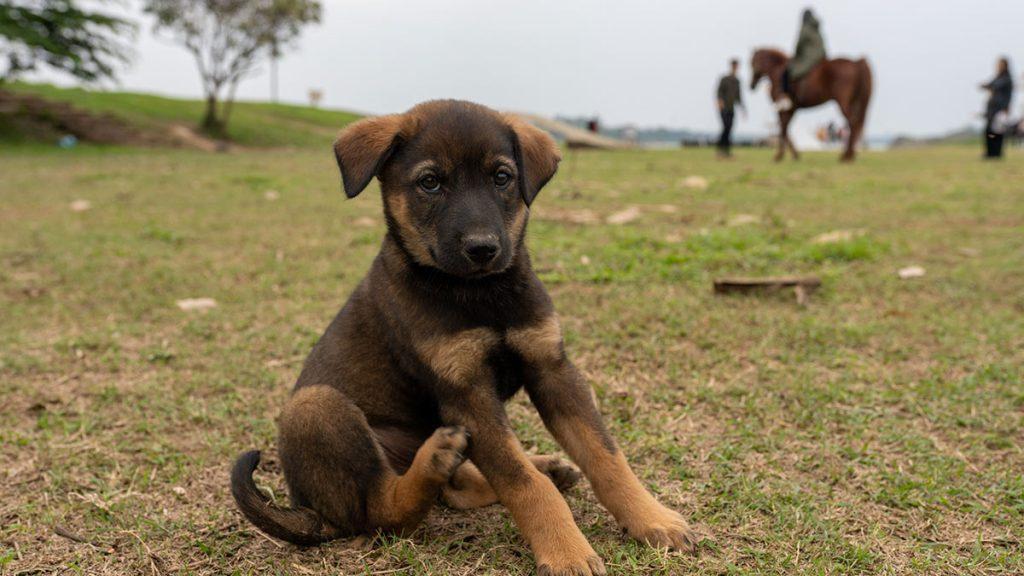 Stray Dog In Park Hanoi