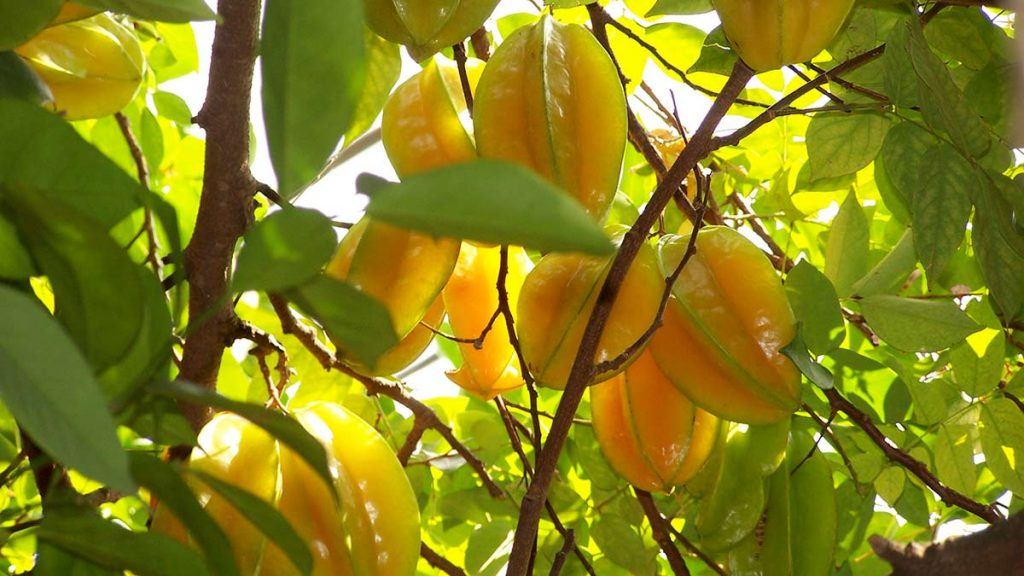 5 strange fruits you must try when visiting Vietnam - Chao ...